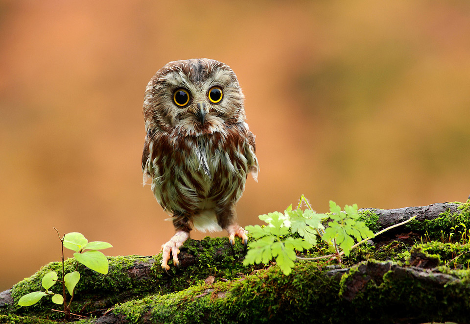 The Amazing World Of Owls In Photography  One Big Photo