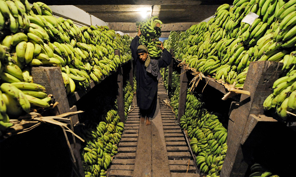 banana storage, pakistan