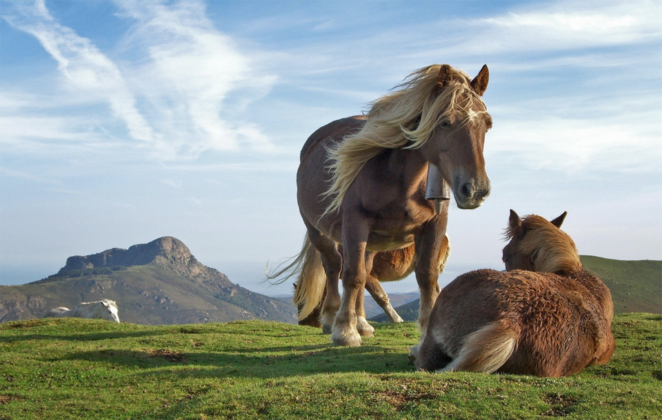 beautiful wild horses