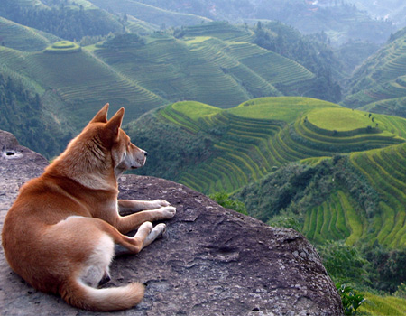 dog with the best view