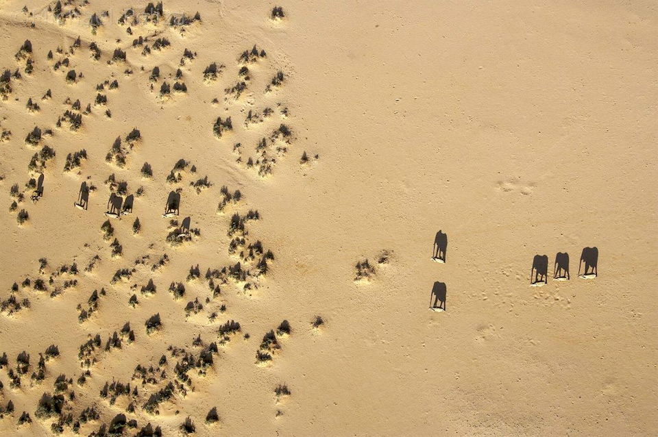 elephant shadows