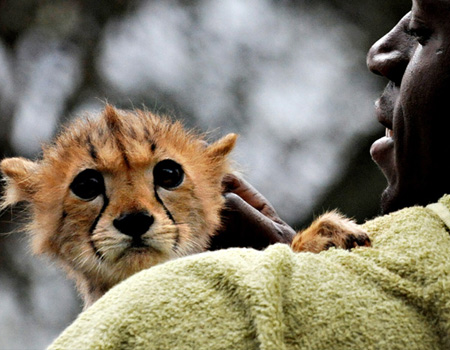 usain bolt holds a cheetah