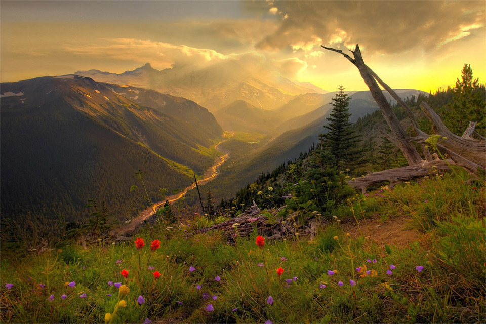 beautiful mount rainier national park