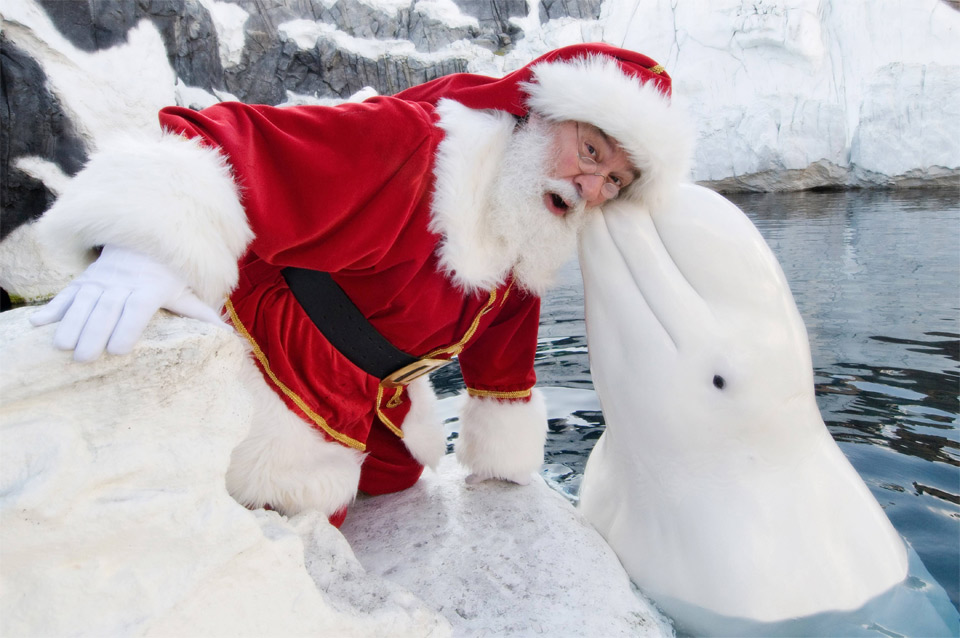 santa visits san diego sea world photo | One Big Photo
