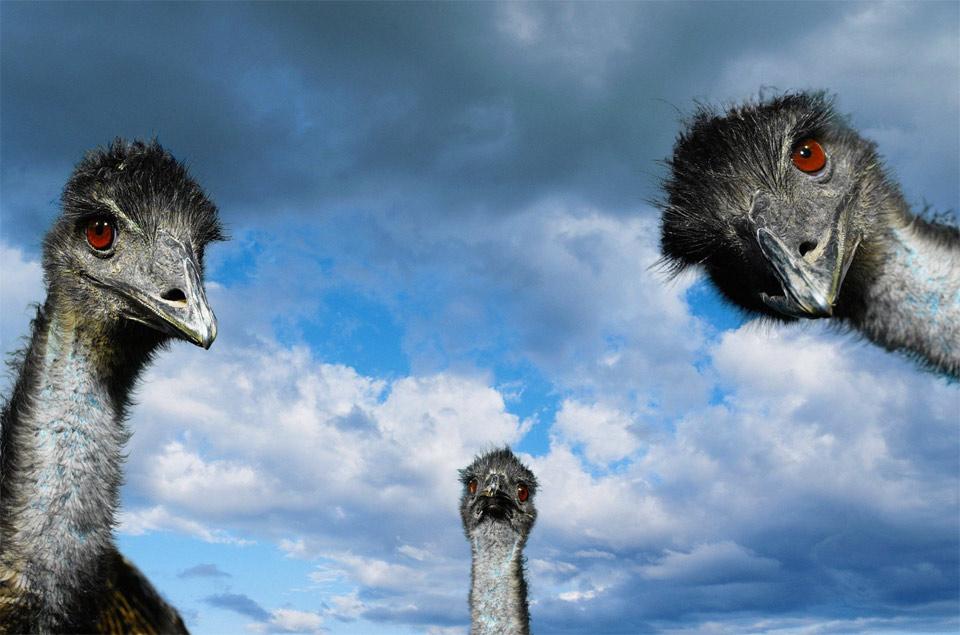 ostrich look
