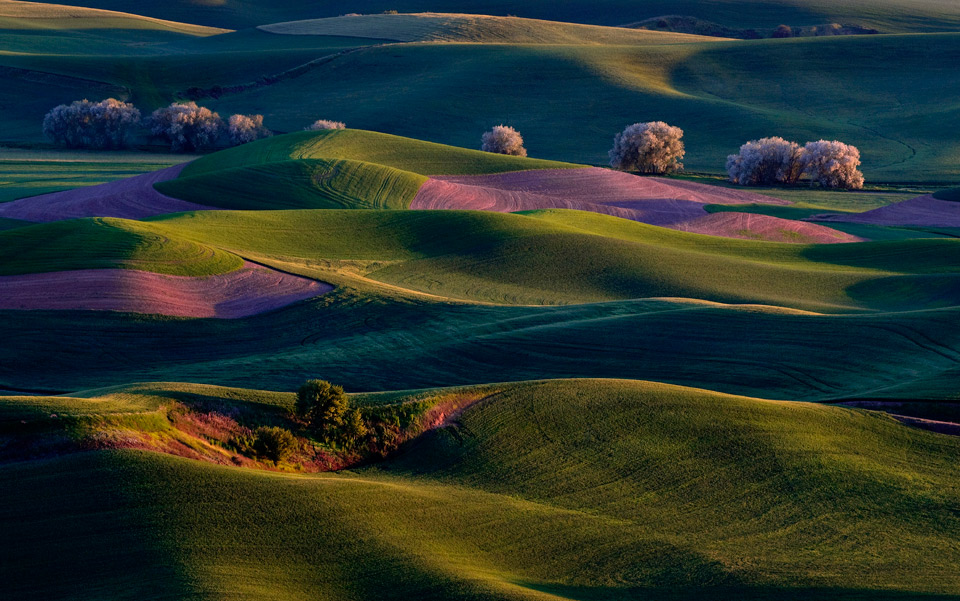 sunrise on palouse hills, washington
