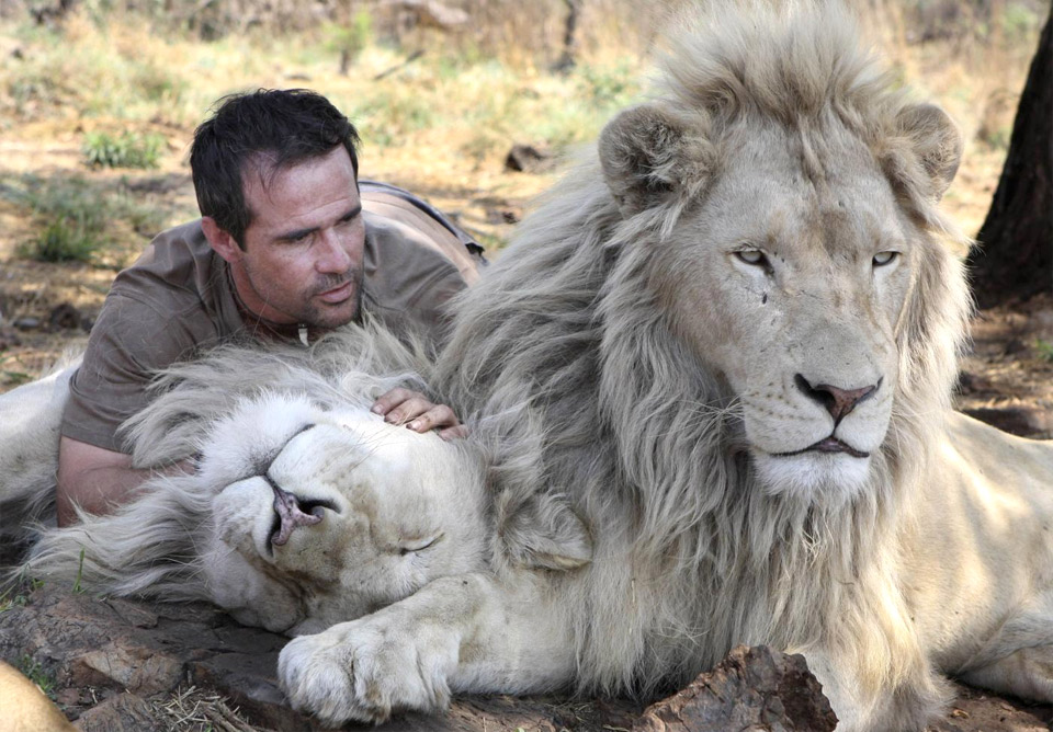 the lion whisperer 2