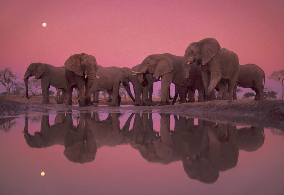 twilight of the giant elephants