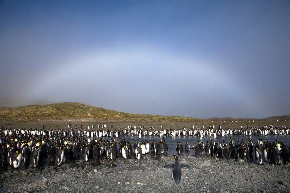 white rainbow over penguins