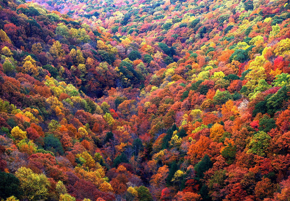 sea of fall colors