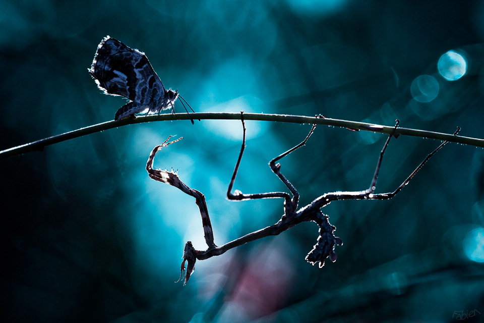 butterfly and mantis