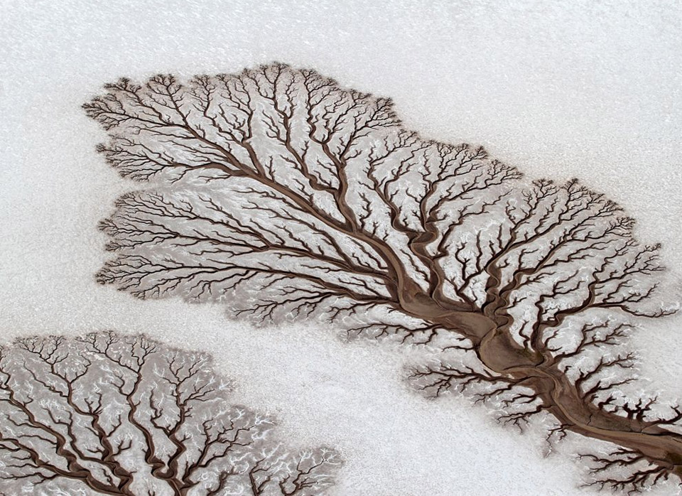 rivers forming treelike figures on the desert, mexico