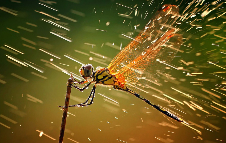 dragonfly in the rain
