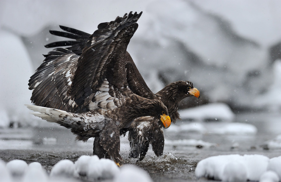 fishing eagles
