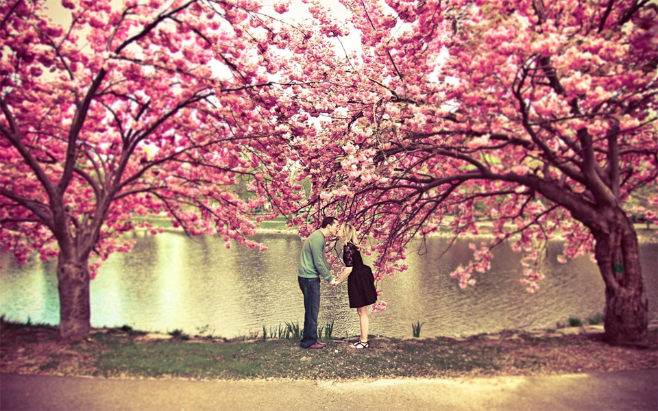 kiss under a cherry blossom tree