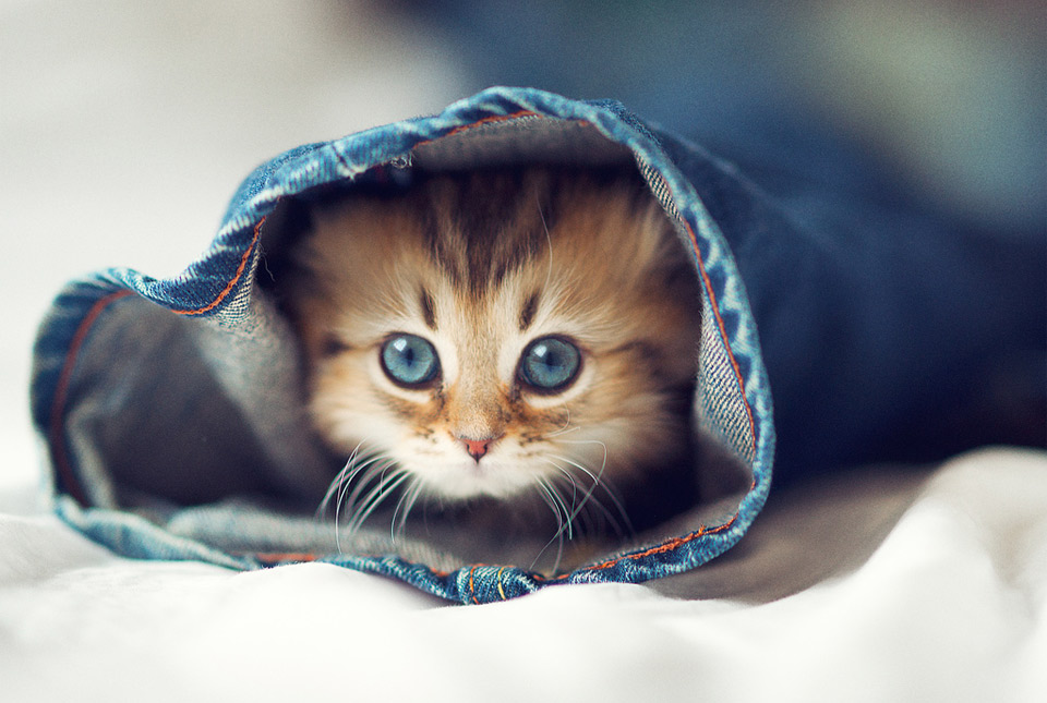 kitty in a sleeve