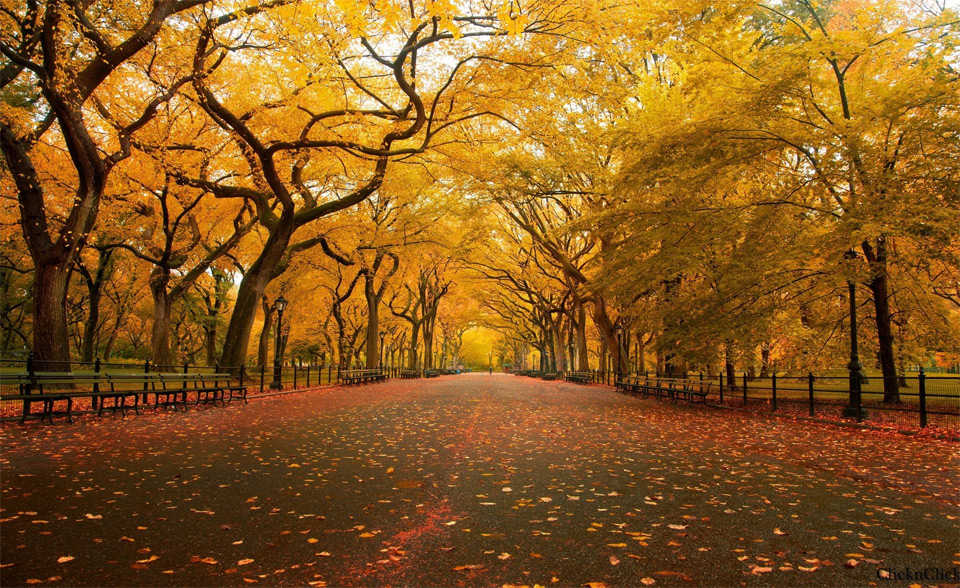 central park autumn wallpaper