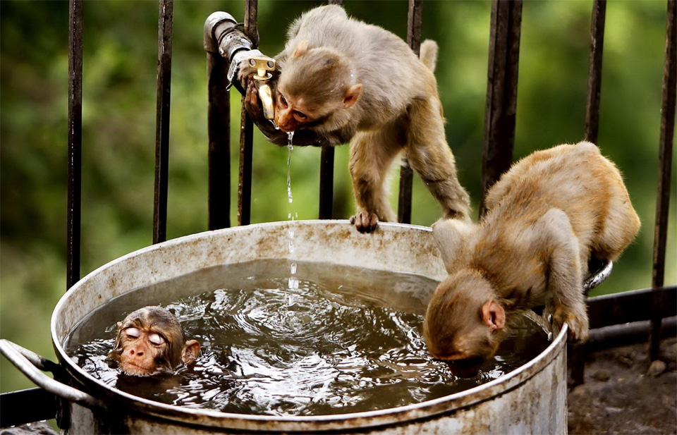 monkeys bath time