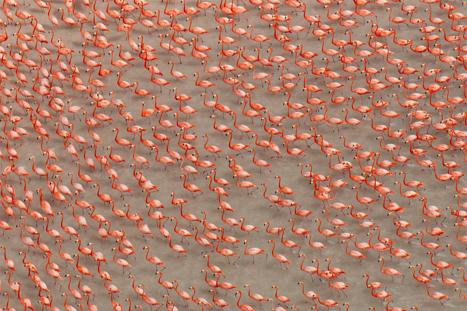 pink flamingos in mexico