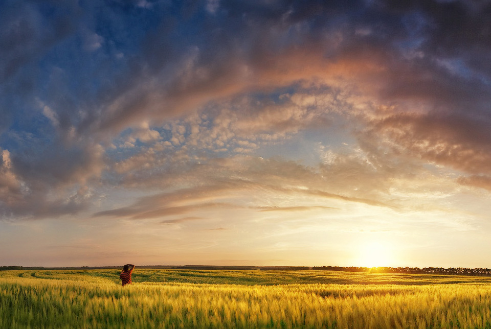 sunset over field