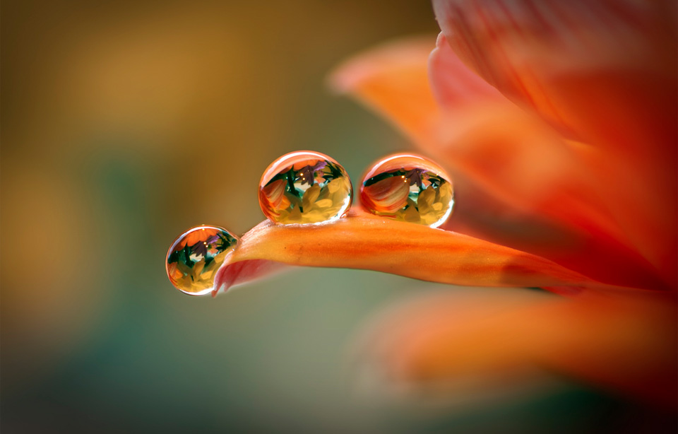 three flower droplets