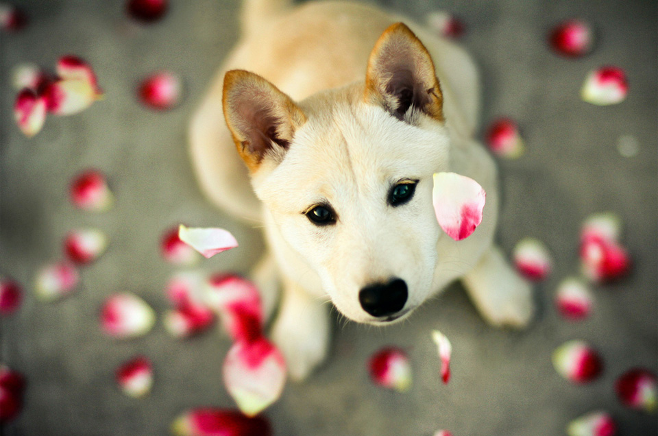 flower petal and the puppy
