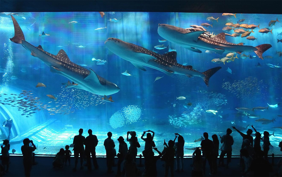 okinawa churaumi aquarium, japan