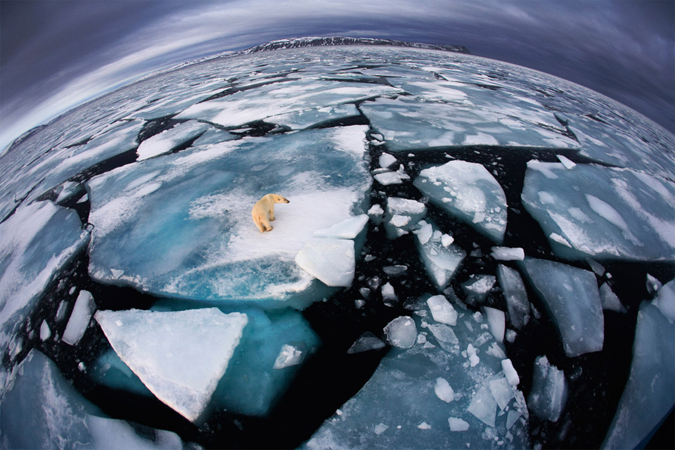 polar bear on cracked ice