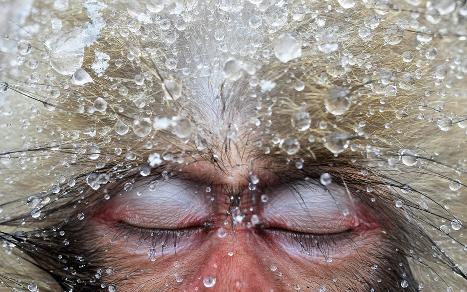 the japanese macaque relax time