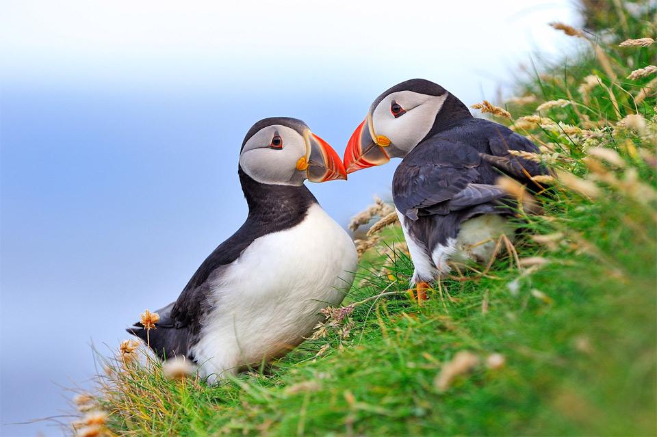 Tetas largas. Fotografías de aves pequeñas: Foro de Muestras y Galerías: Digital Photography Review
