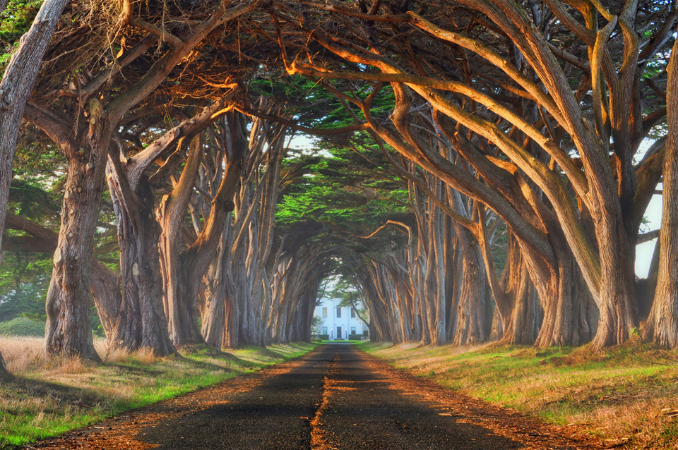 Worlds Most Beautiful Trees Photography