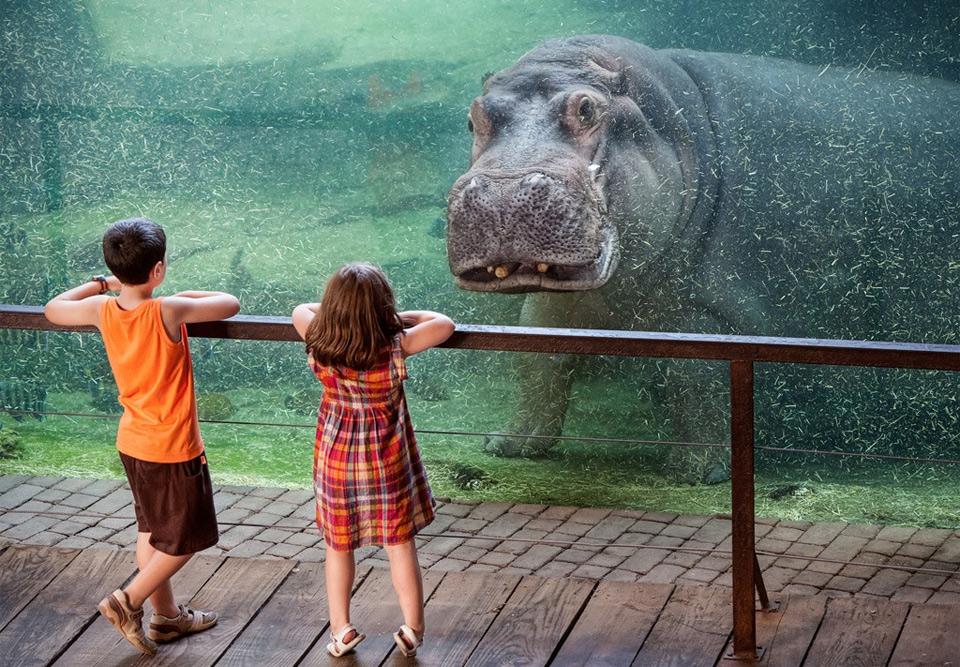 underwater hippo and kids