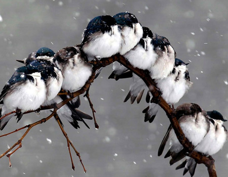 birds on a branch during a snowstorm