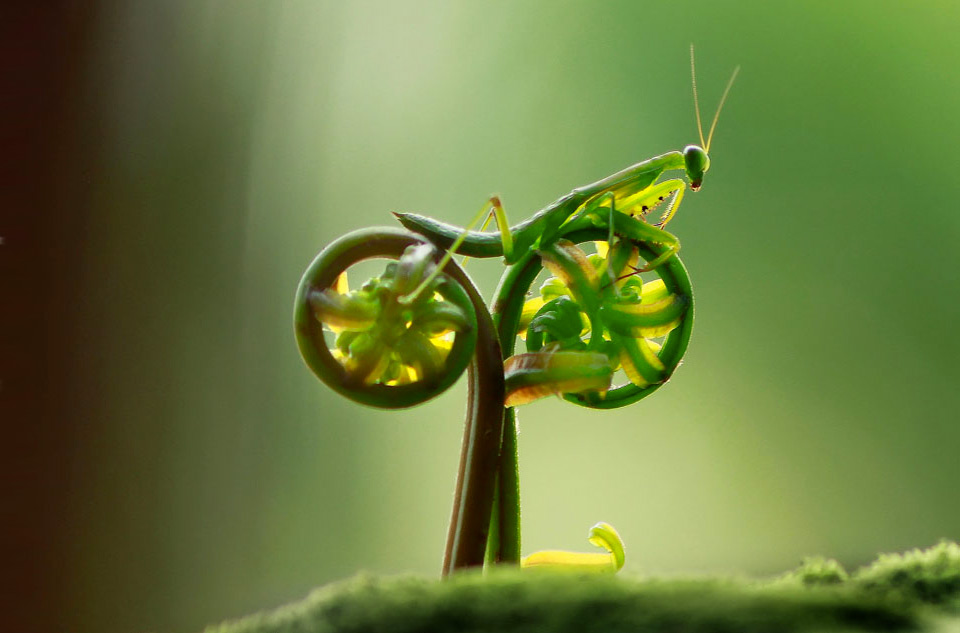 mantis on natural bike
