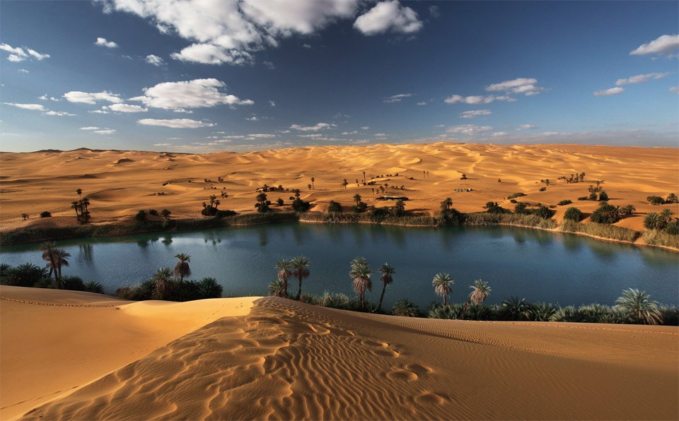 Image result for oasis desert