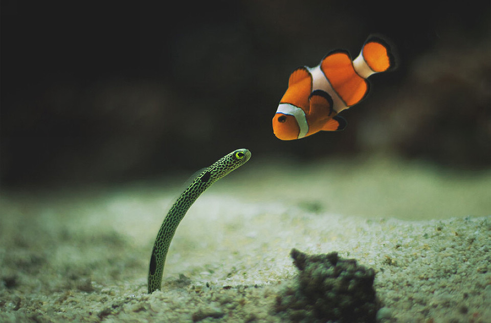 nice to meet you nemo