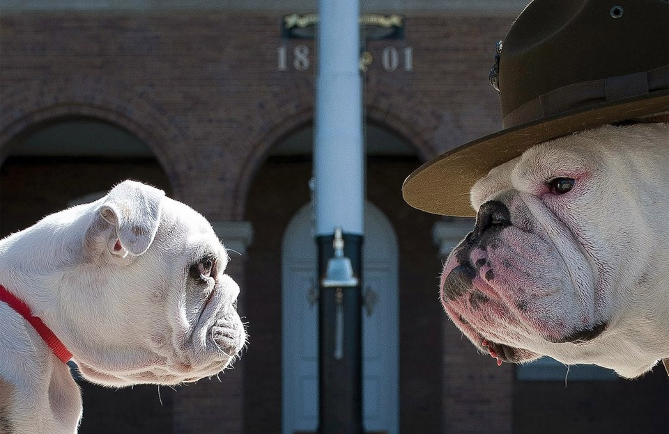 chesty, the marine corps mascot, and his successor