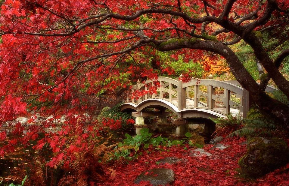 japanese garden, british columbia