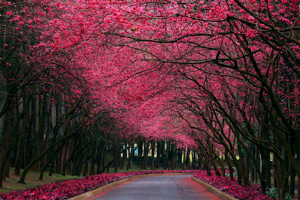 World S Most Beautiful Trees Photography One Big Photo