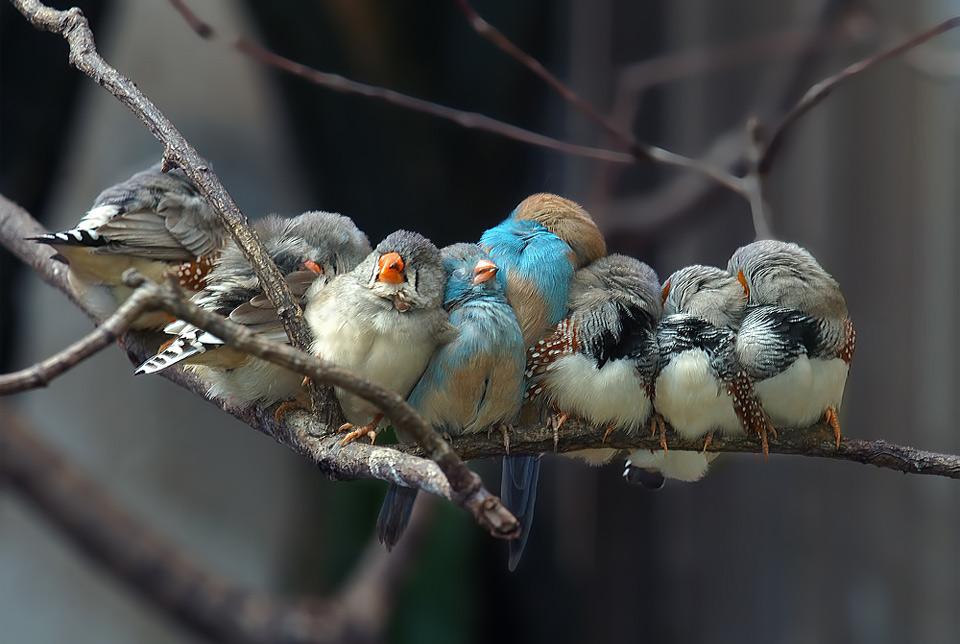 birds taking a nap