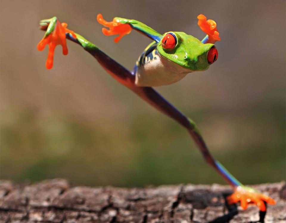 kung fu frog