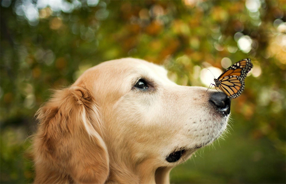 a dog and the butterfly