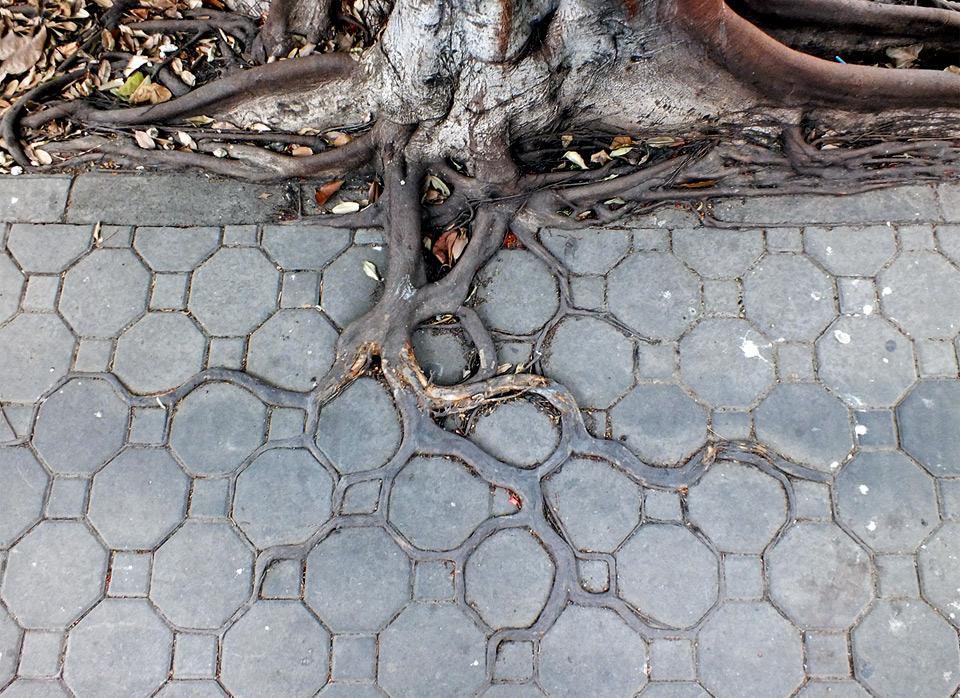 adaptive roots in concrete jungle