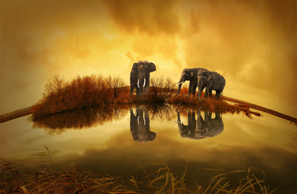 elephant family at sunset, thailand