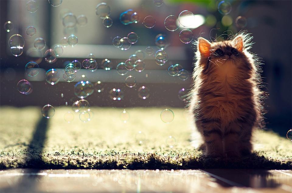 kitten enjoys bubbles