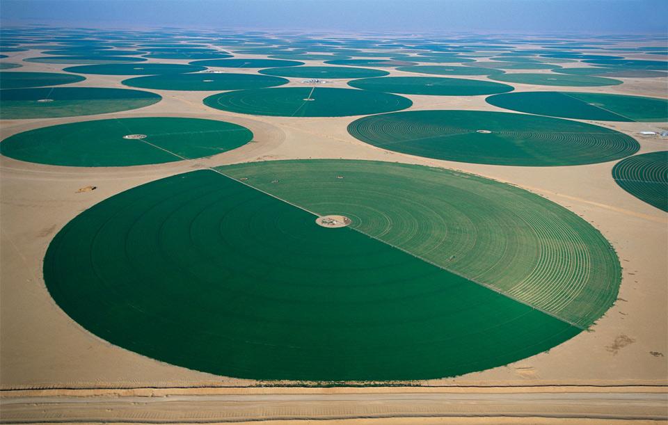 agriculture in desert, saudi arabia