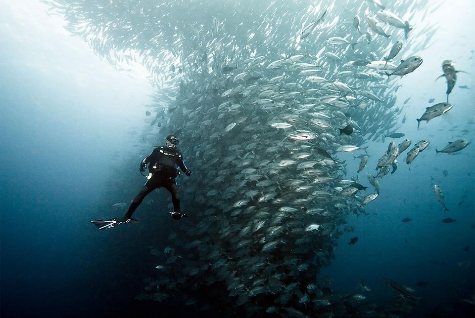 scuba diving in cocos island