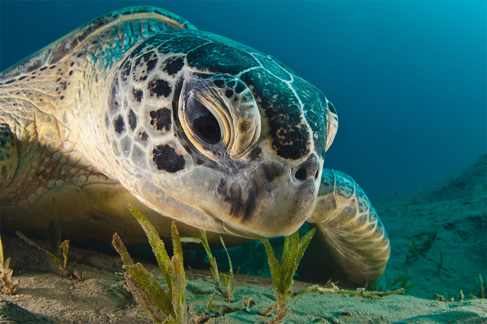 sea turtle close-up