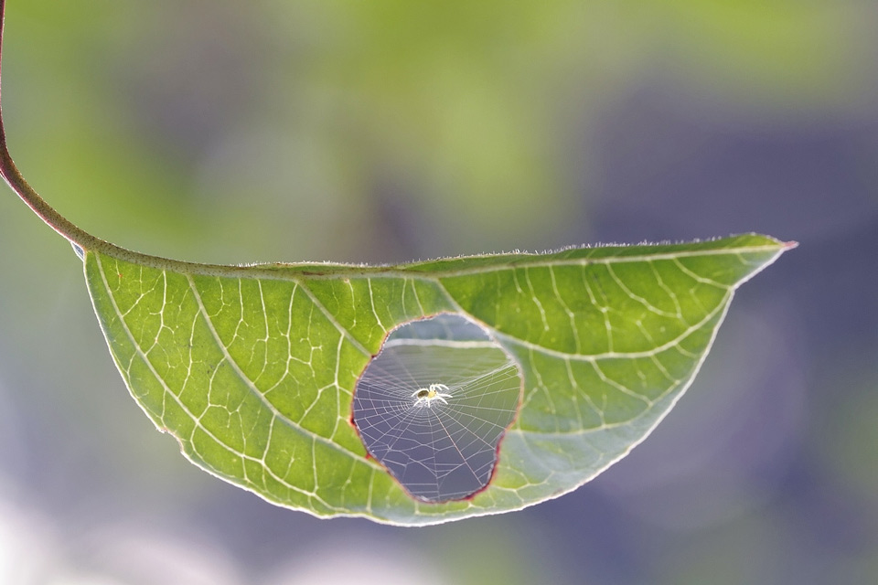 spider net inside leaf