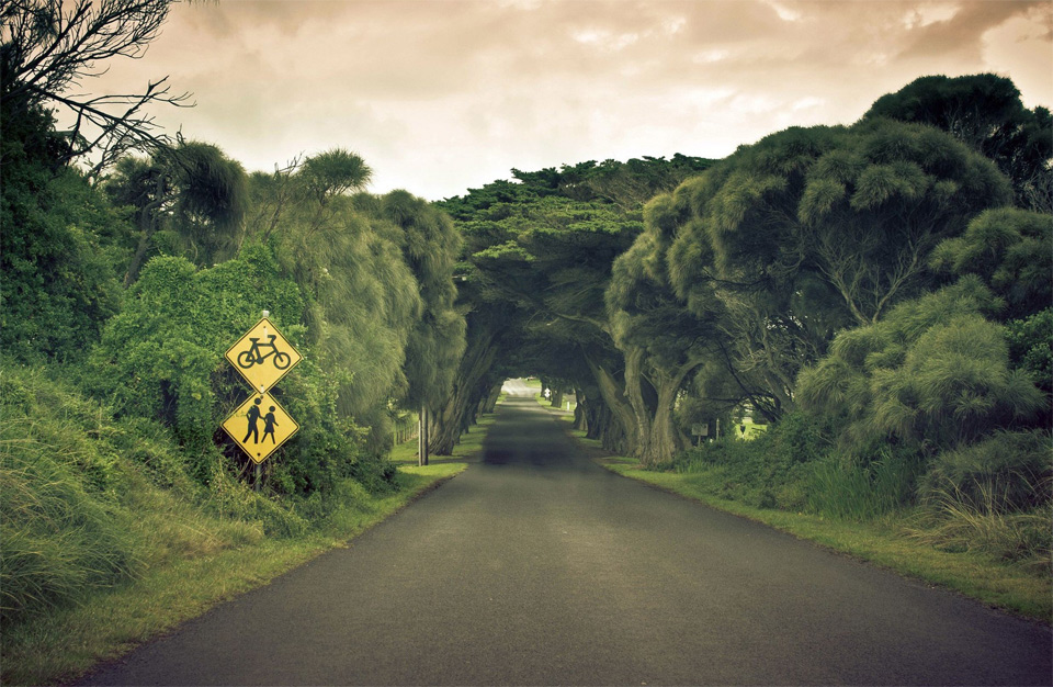 tree tunnel, australia